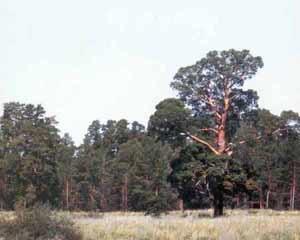 Терсекский лес