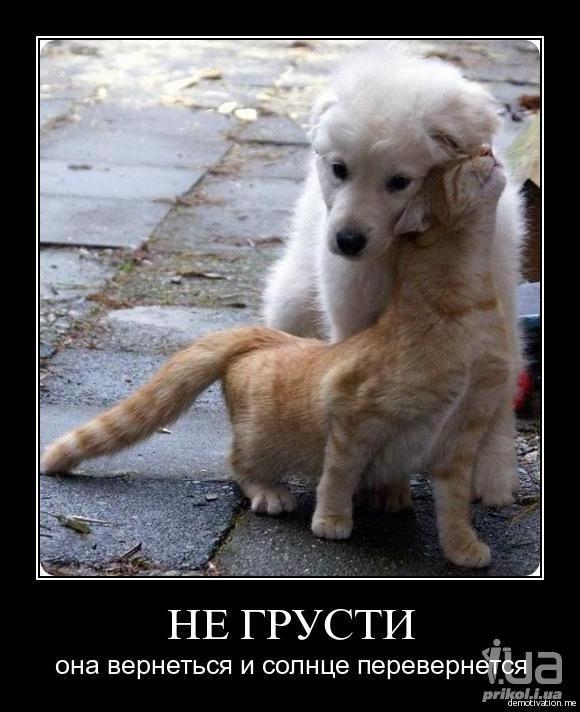 Картинки друзьям не грусти