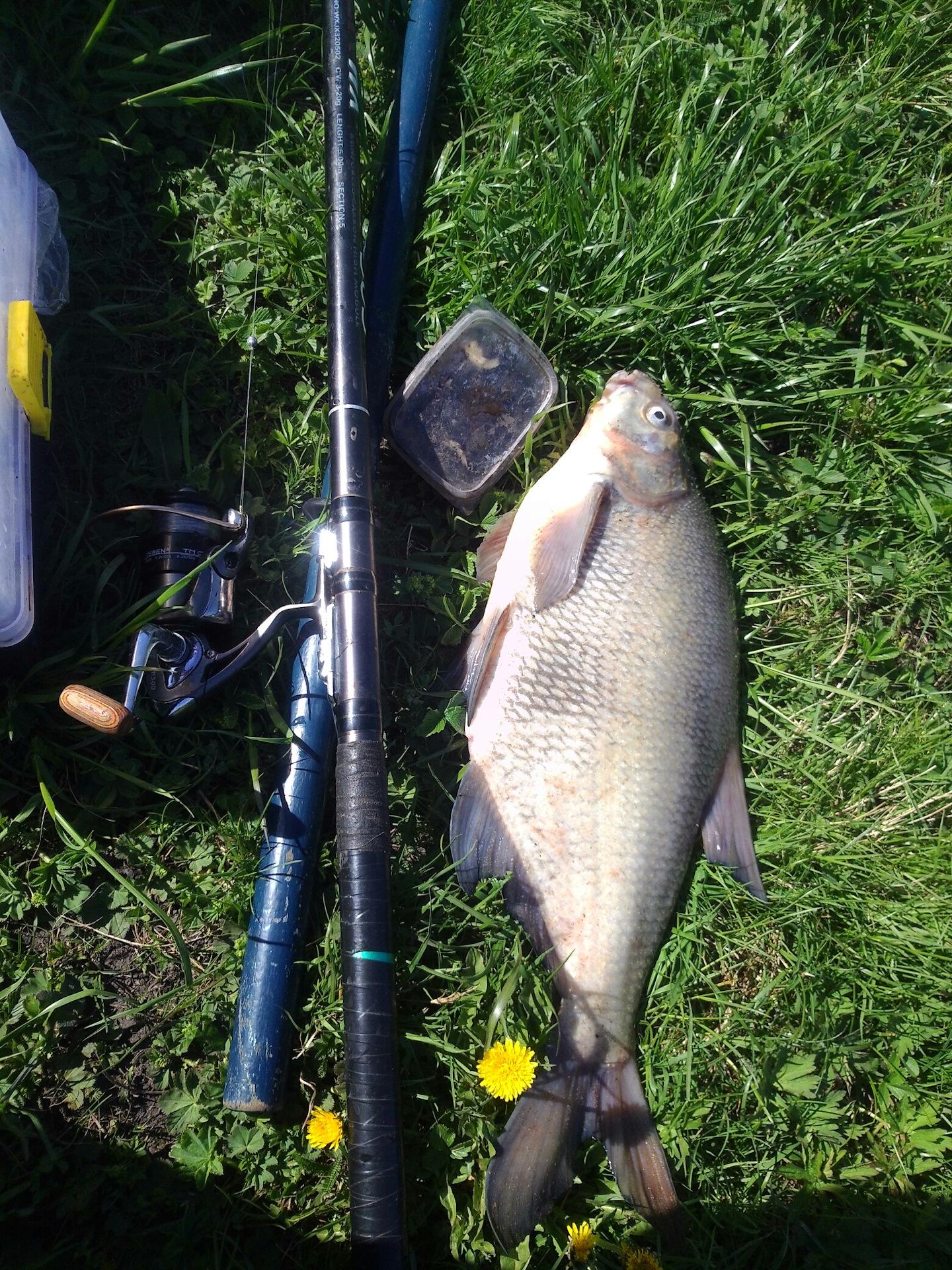 Рыбалка в тульской области 2019 свежие отзывы