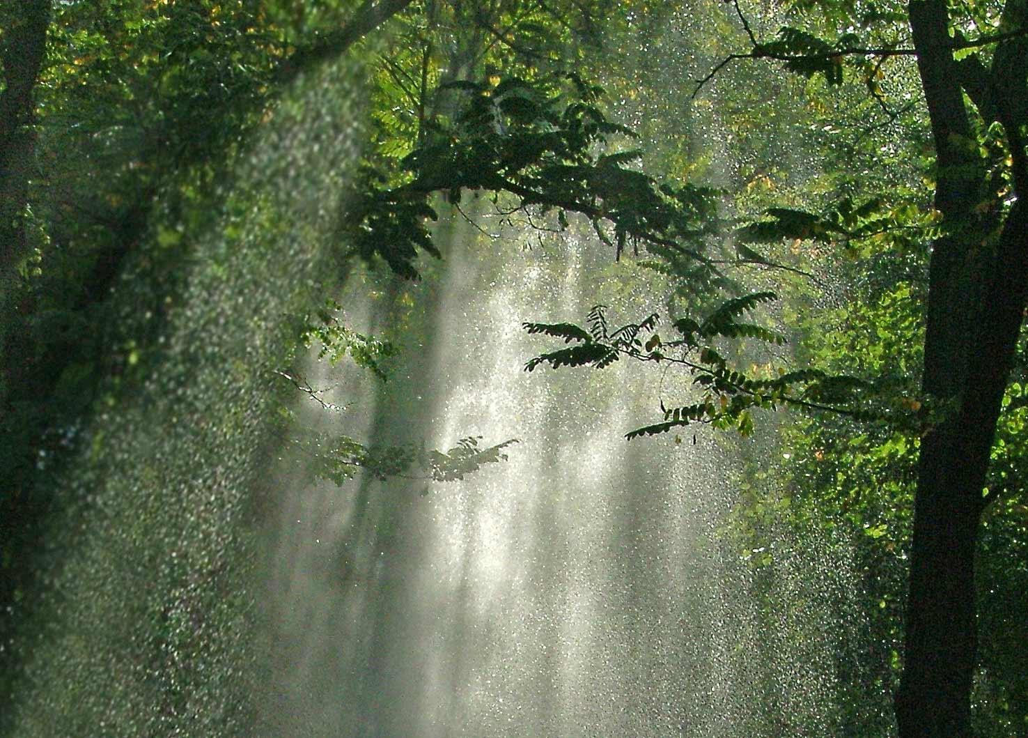 современных картинки на тему дождь в лесу выхода кашмарных
