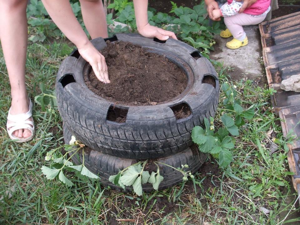 Посадить клубнику в шинах