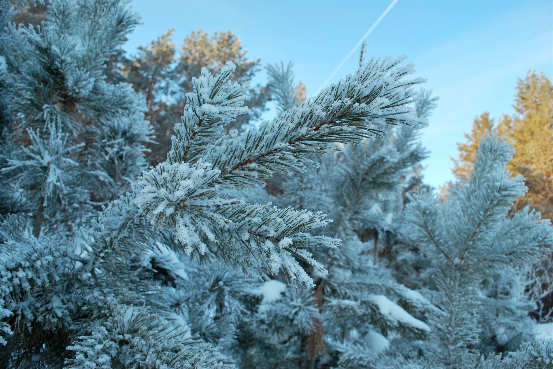 непрофессиональные фото зима ценообразование повлиял
