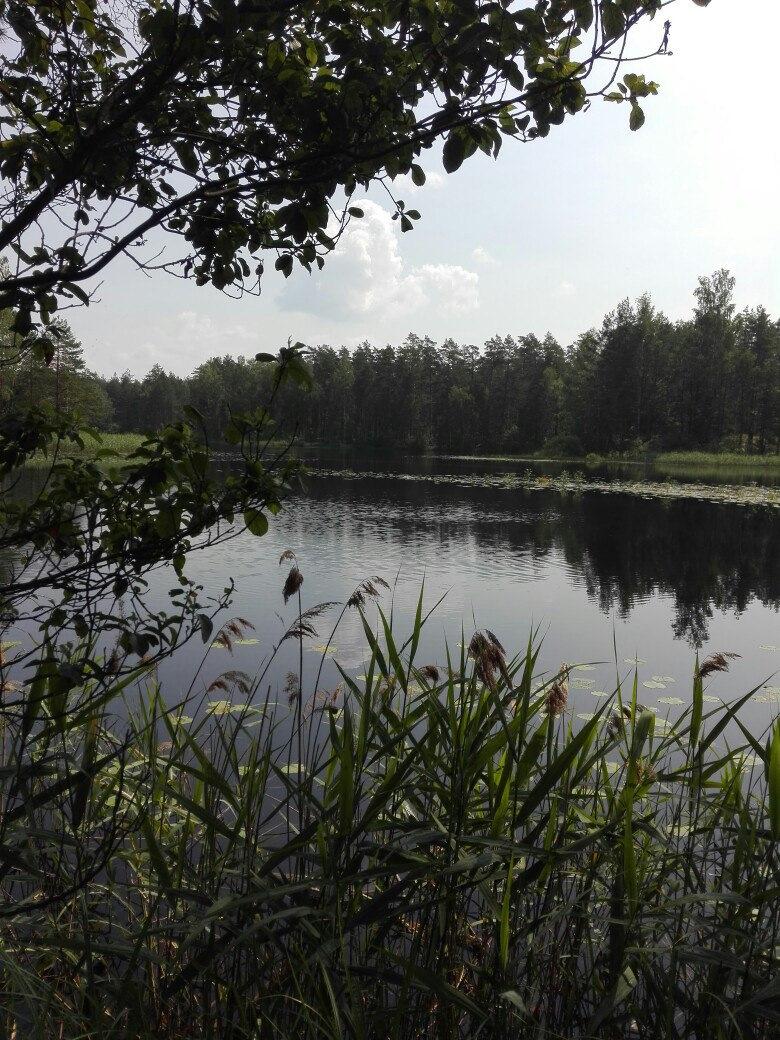 Озеро родионово сосновский район фото