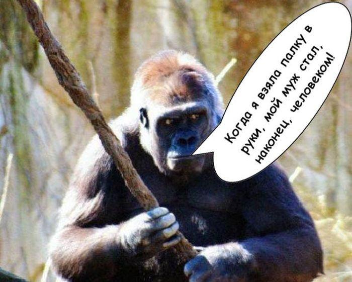Прикольные картинки обезьян с надписями