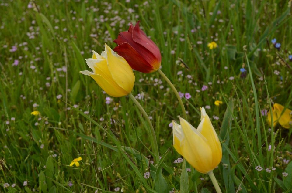 Немецкий фарфоровый сервиз полевой цветок фото мне интересно