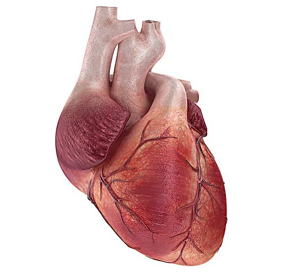Пороки сердечных клапанов: как диагностируют и лечат в Германии