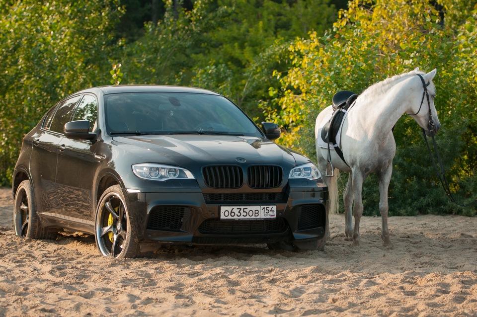 Бмв и лошадь картинки