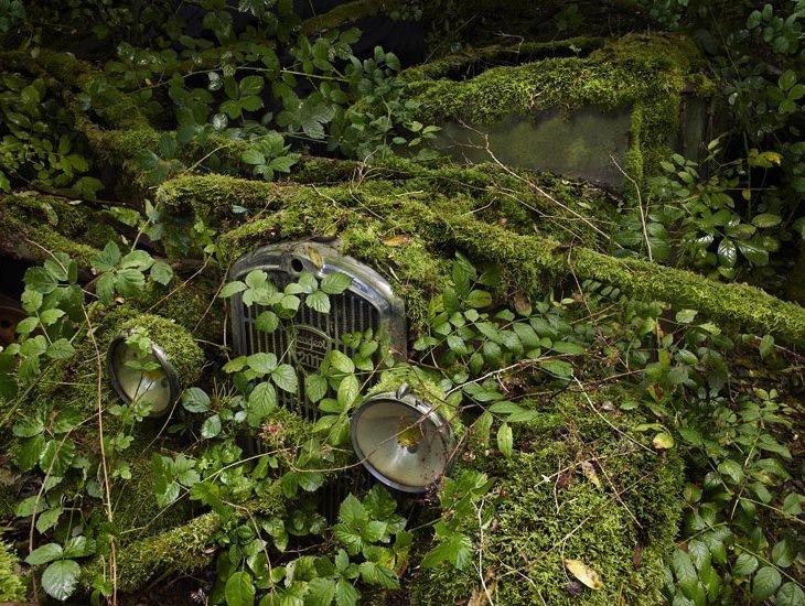 Брошенные автомобили авто в лесу лес