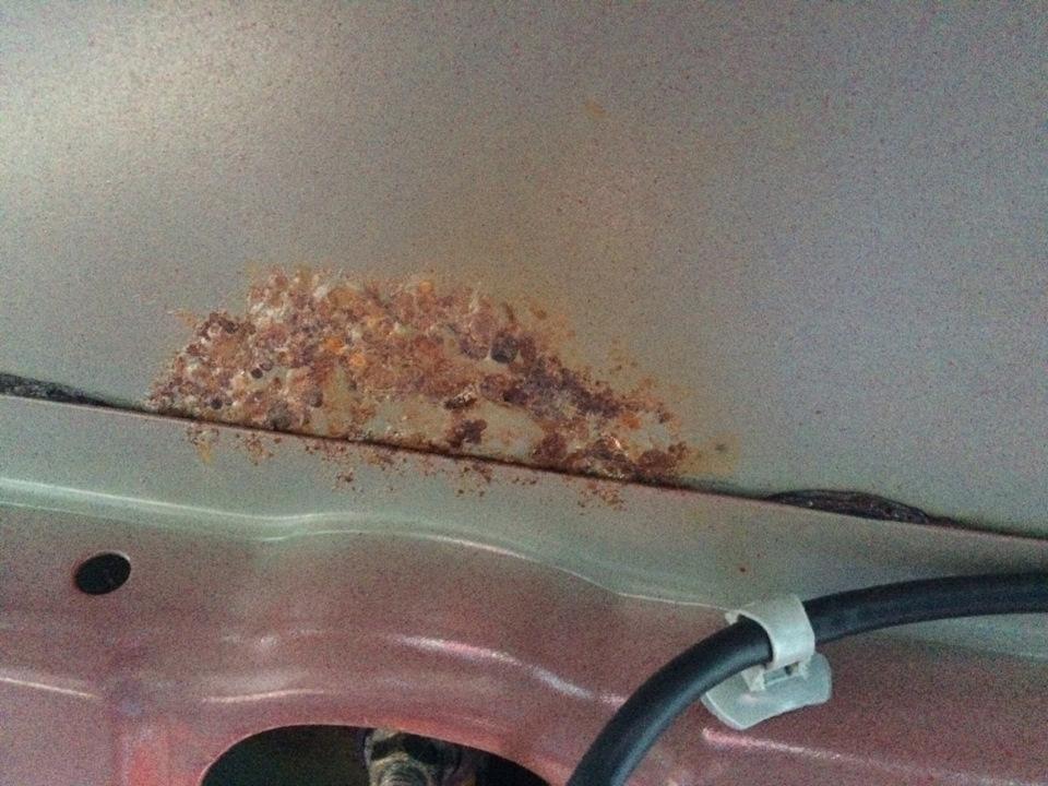 Как убрать жучки на кузове своими руками