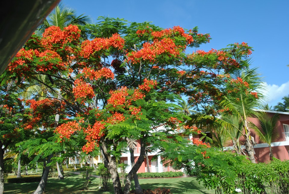 Pdf the jamaican root tonics