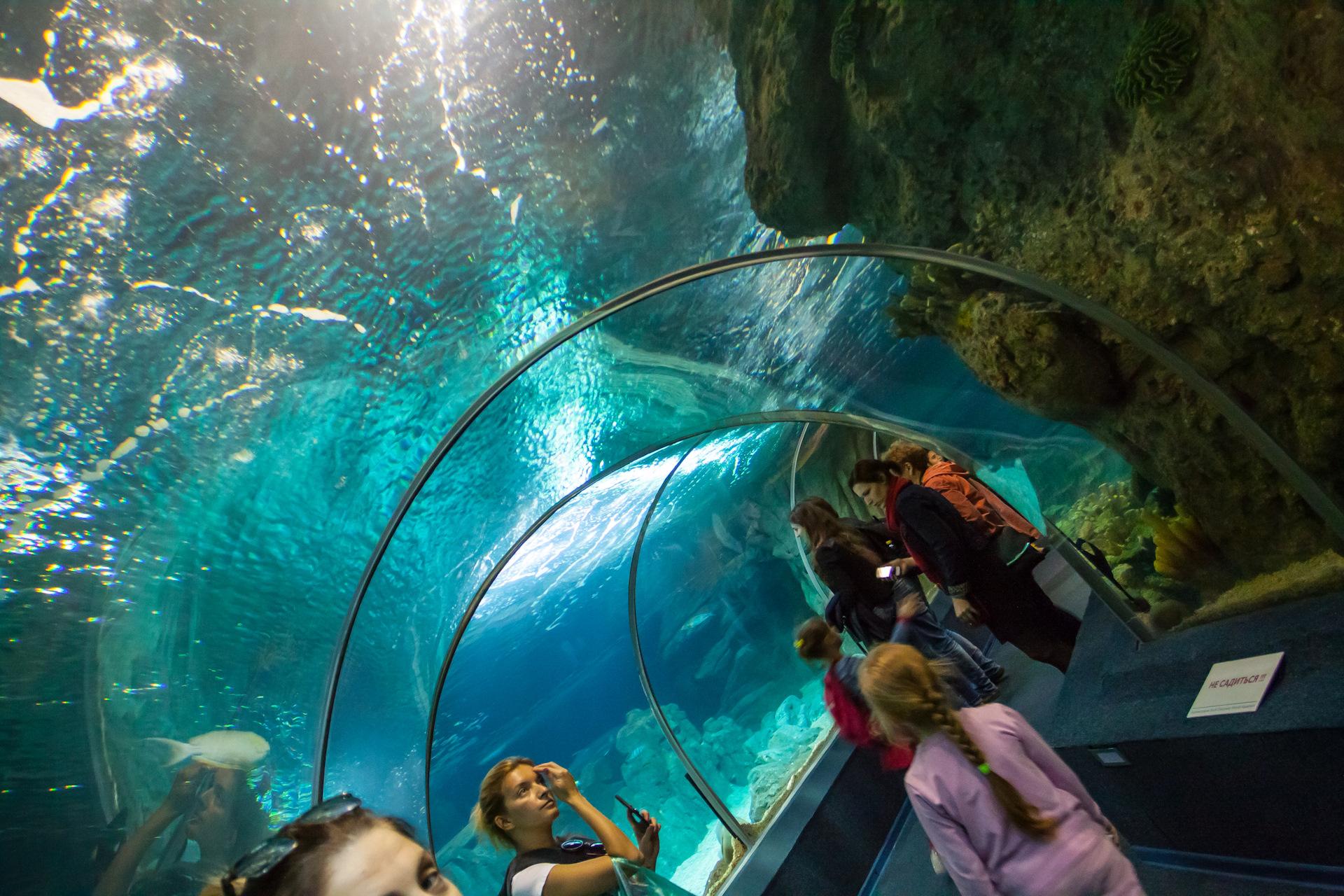 большой адлерский океанариум фото важный главный богов