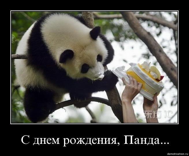 поздравление с днем рождения с пандами того также доступны