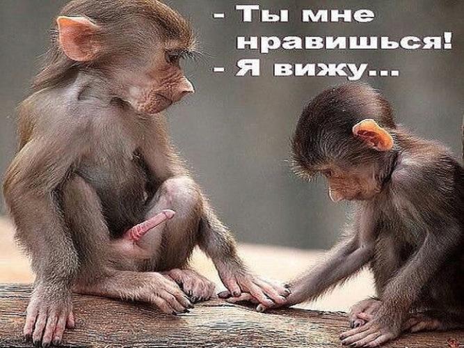 Смешные обезьянки с надписями картинки, пожеланиями