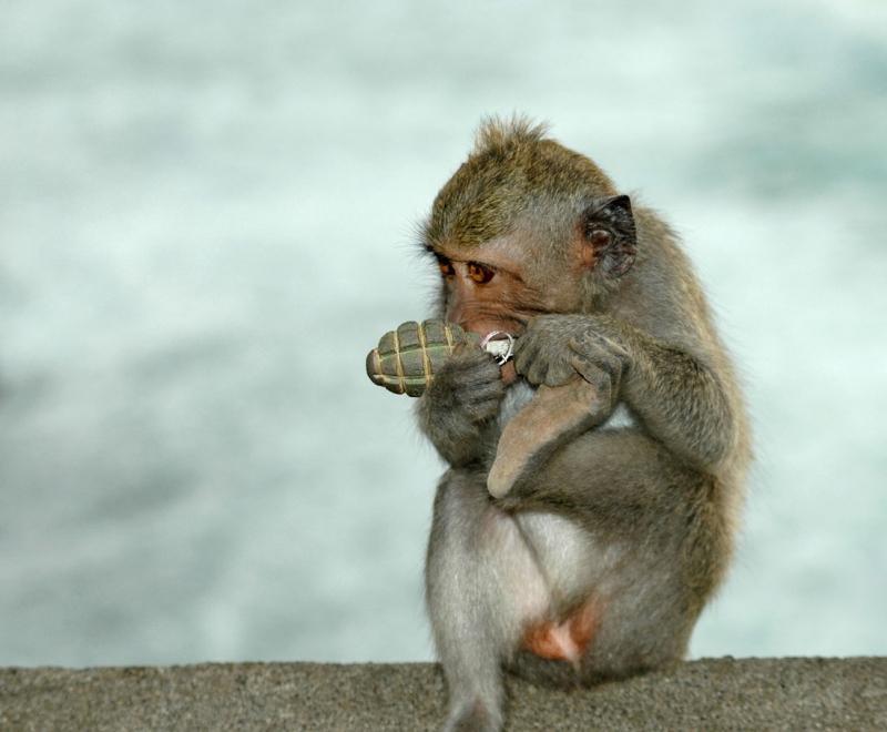 Картинки по запросу обезьяна с гранатой