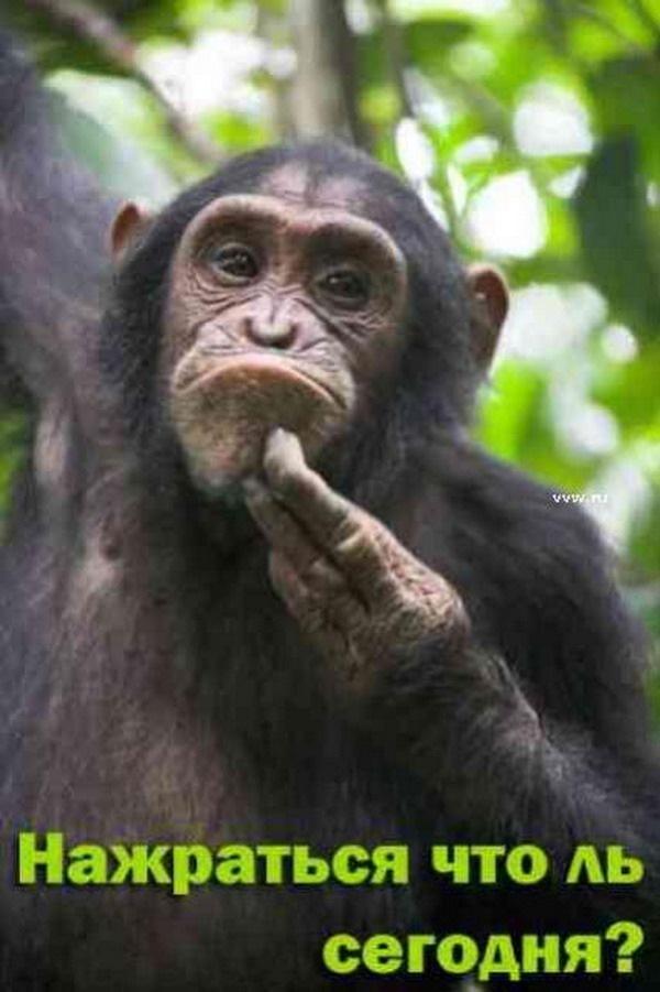 Смешные обезьянки с надписями картинки, для мемов