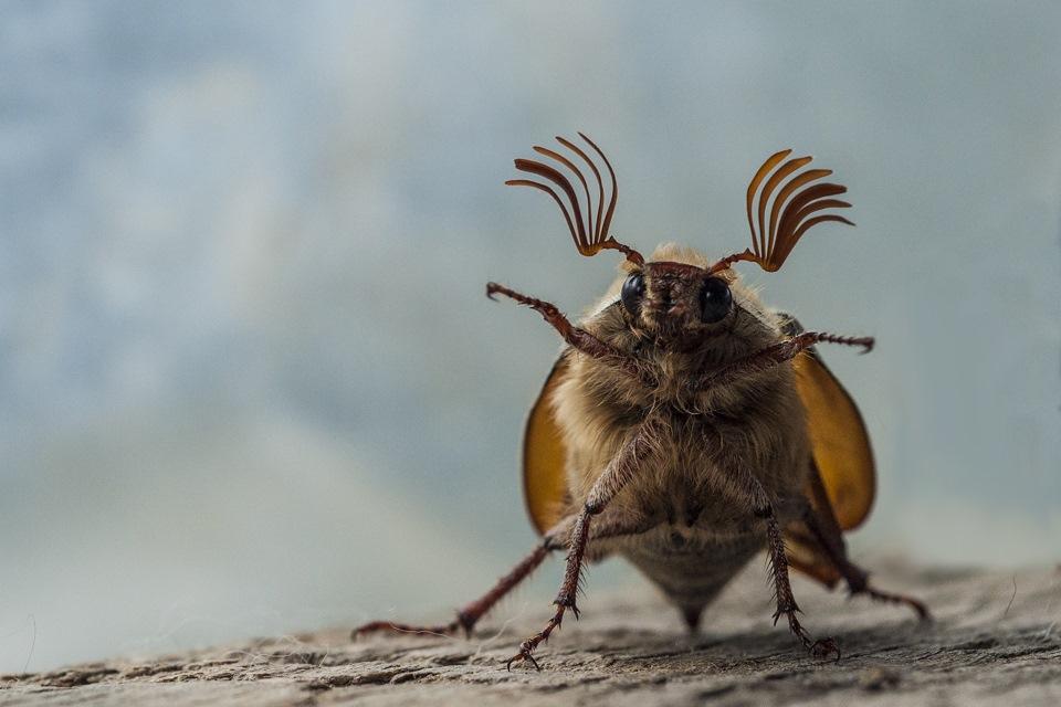 Днем, майские жуки смешные картинки