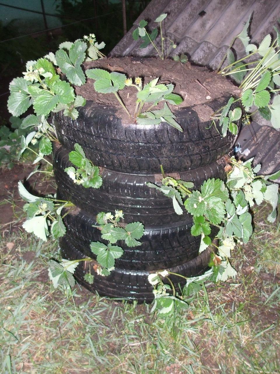 Выращивание клубники в шинах вертикально 83