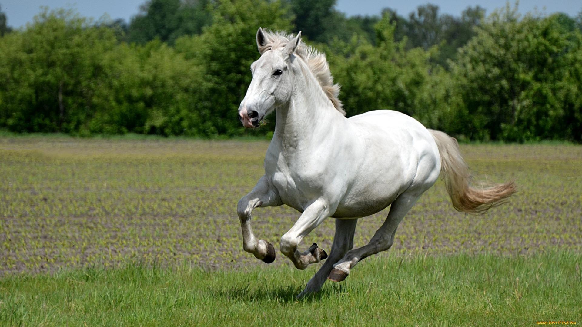 бегать как лошадь картинки любите удивлять