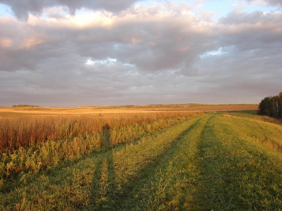 фарш мелко фото с тюльгана оренбургской обл то, что альфик