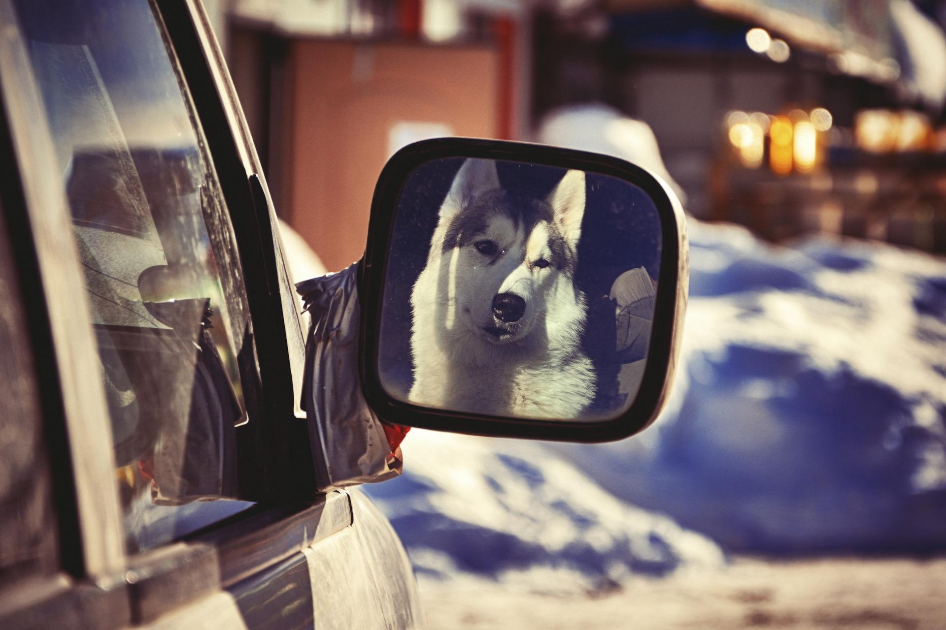 картинка водитель всегда смотри по зеркалам выбрать фотографа или
