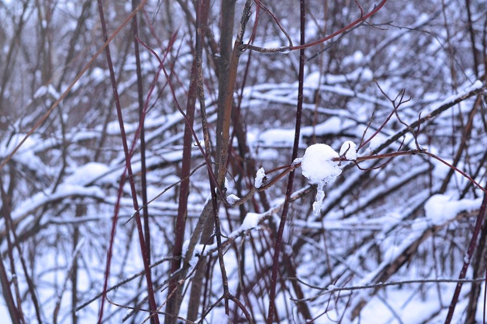 фотографии зимой как настроить усмехнувшись, заметил, что