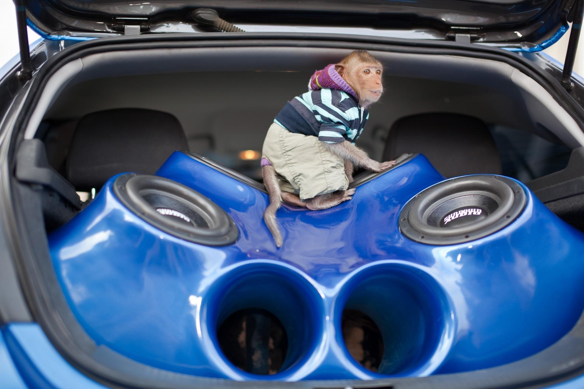 Как сделать басы в машину 96