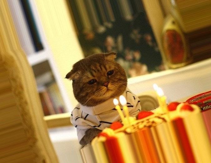 Написать, у меня сегодня день рождения картинки с котами