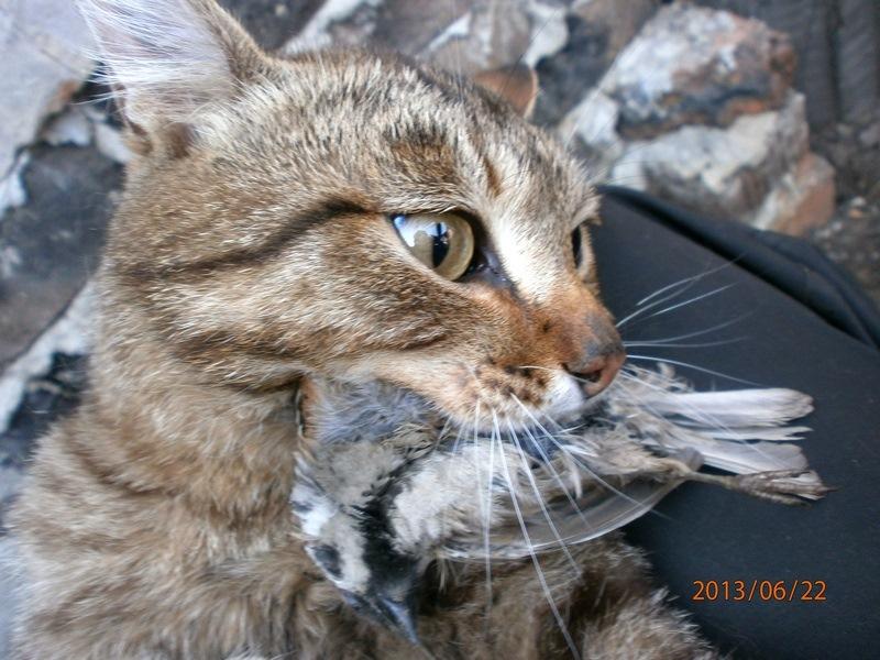 Воробей и кот фото