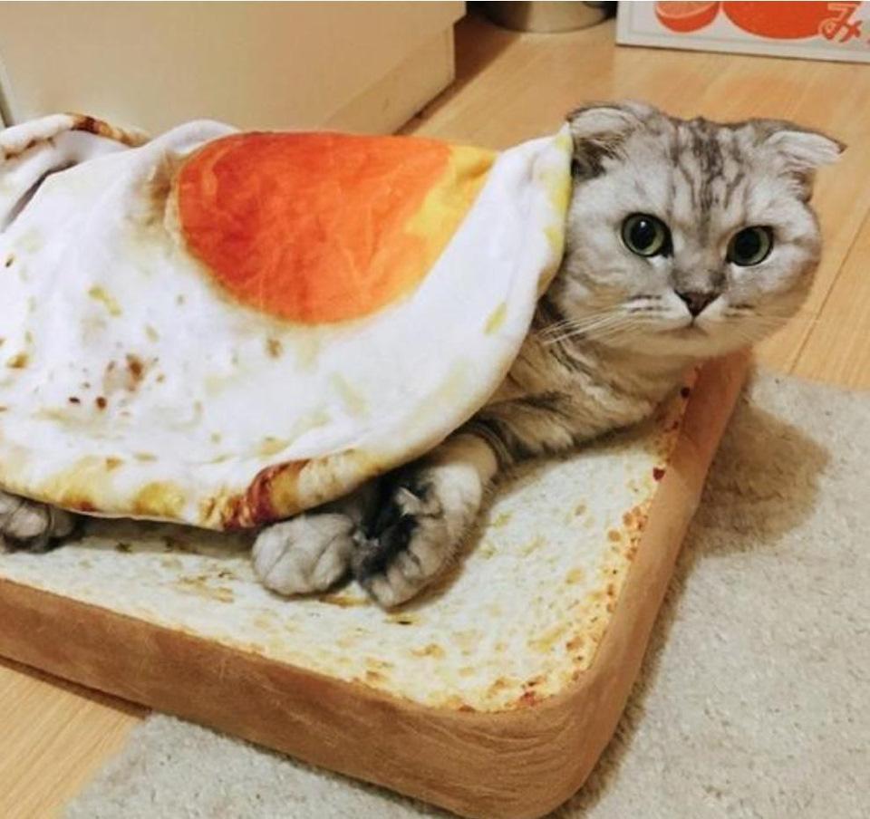 Приятного аппетита картинки смешные с животными с надписями