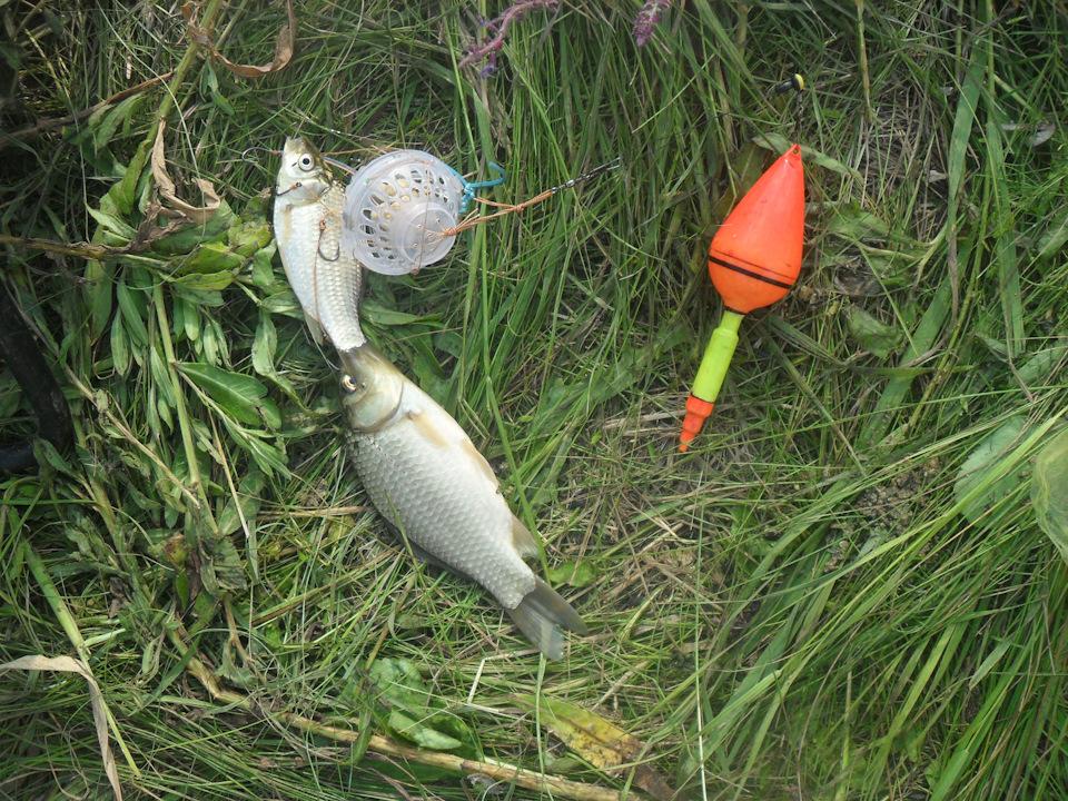 рыбалка на толстолобика снасти