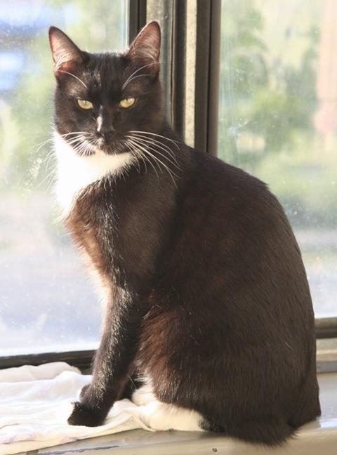 Черный хитрый кот