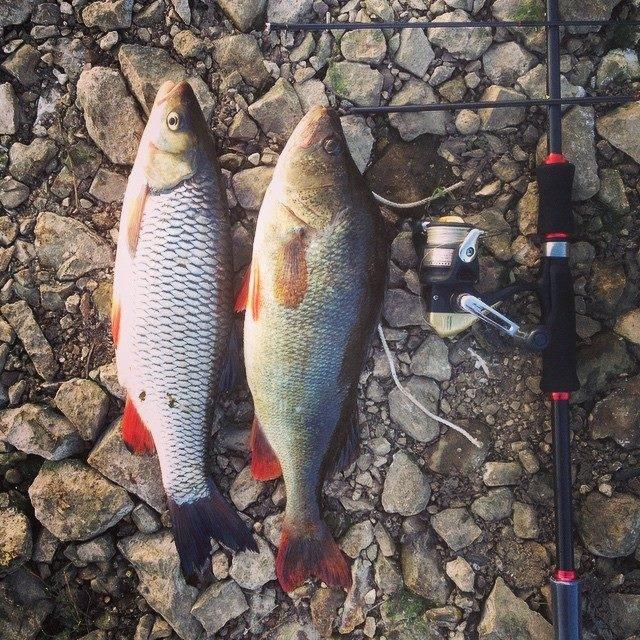 Рыбалка на копылово сегодня