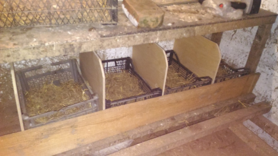 Гнезда в курятнике своими руками фото для 10 кур для зимы 82