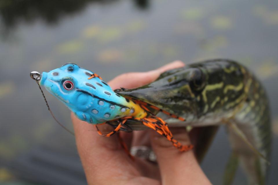 Как ловить щуку на лягушку и подобрать правильно снасти