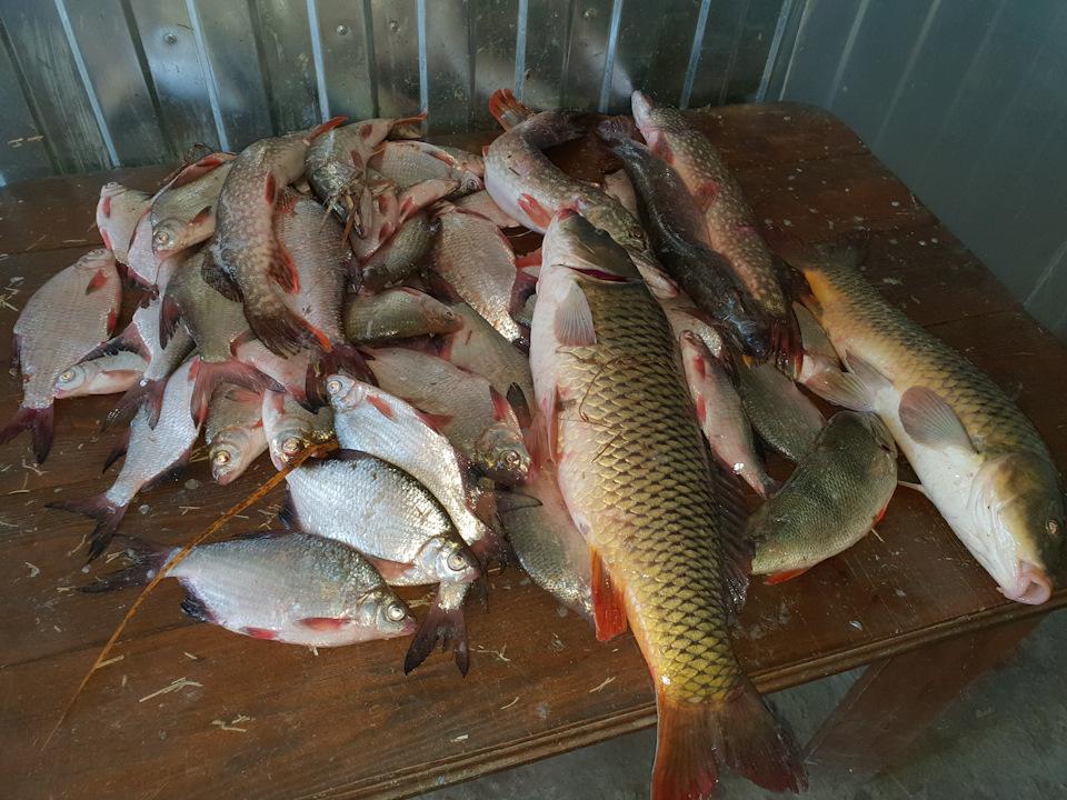 Рыбалка в астраханская область