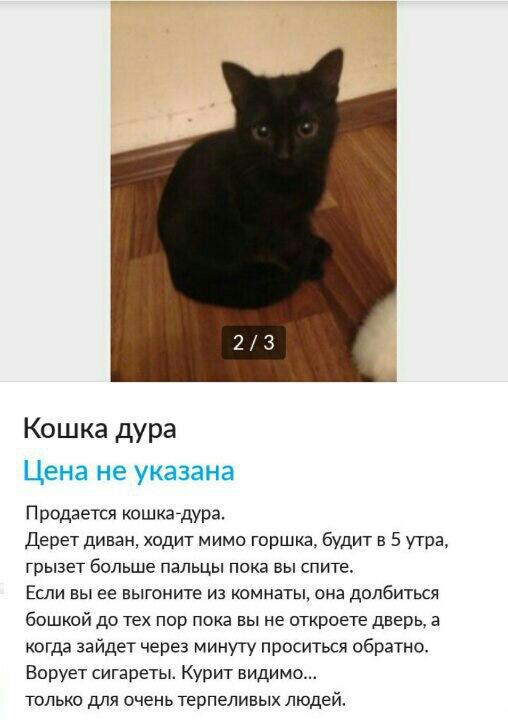 Картинки кошка объявление