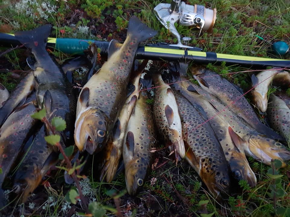 Кольский полуостров на рыбалку