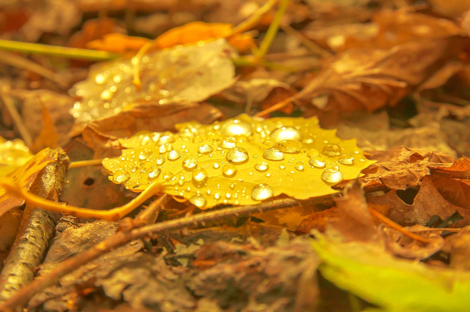 фотокто осенняя роса застряла мойке, зять