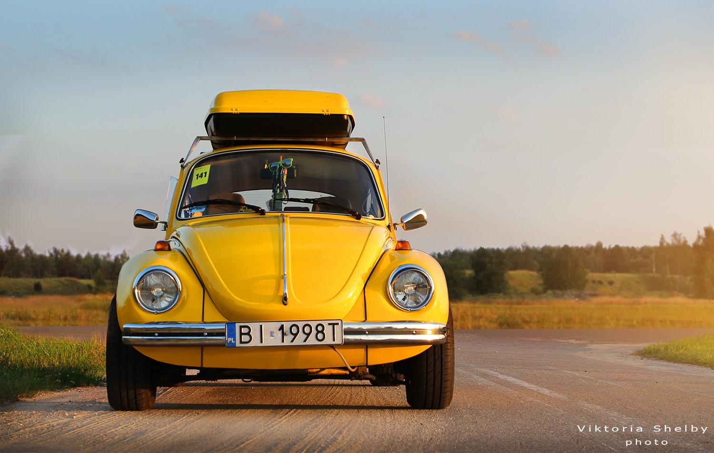 Хлебный жук фото каталог колёс
