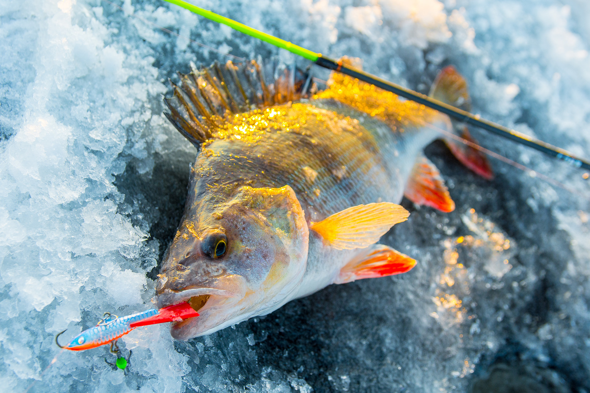 Рыбалка в чайковском на каме