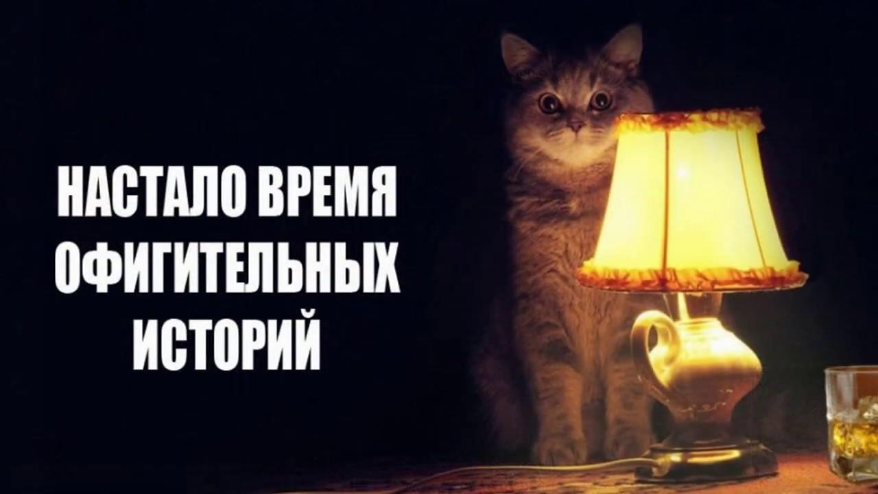 настало время офигительных историй кот картинка схему можно