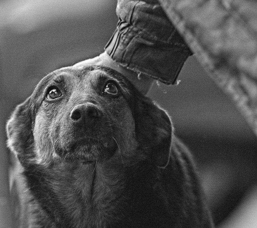 Картинки с собаками грустные с надписями