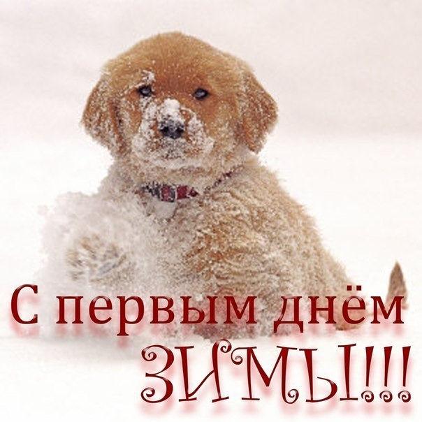 Картинка с первым днем зимы, открытка оленями картинки