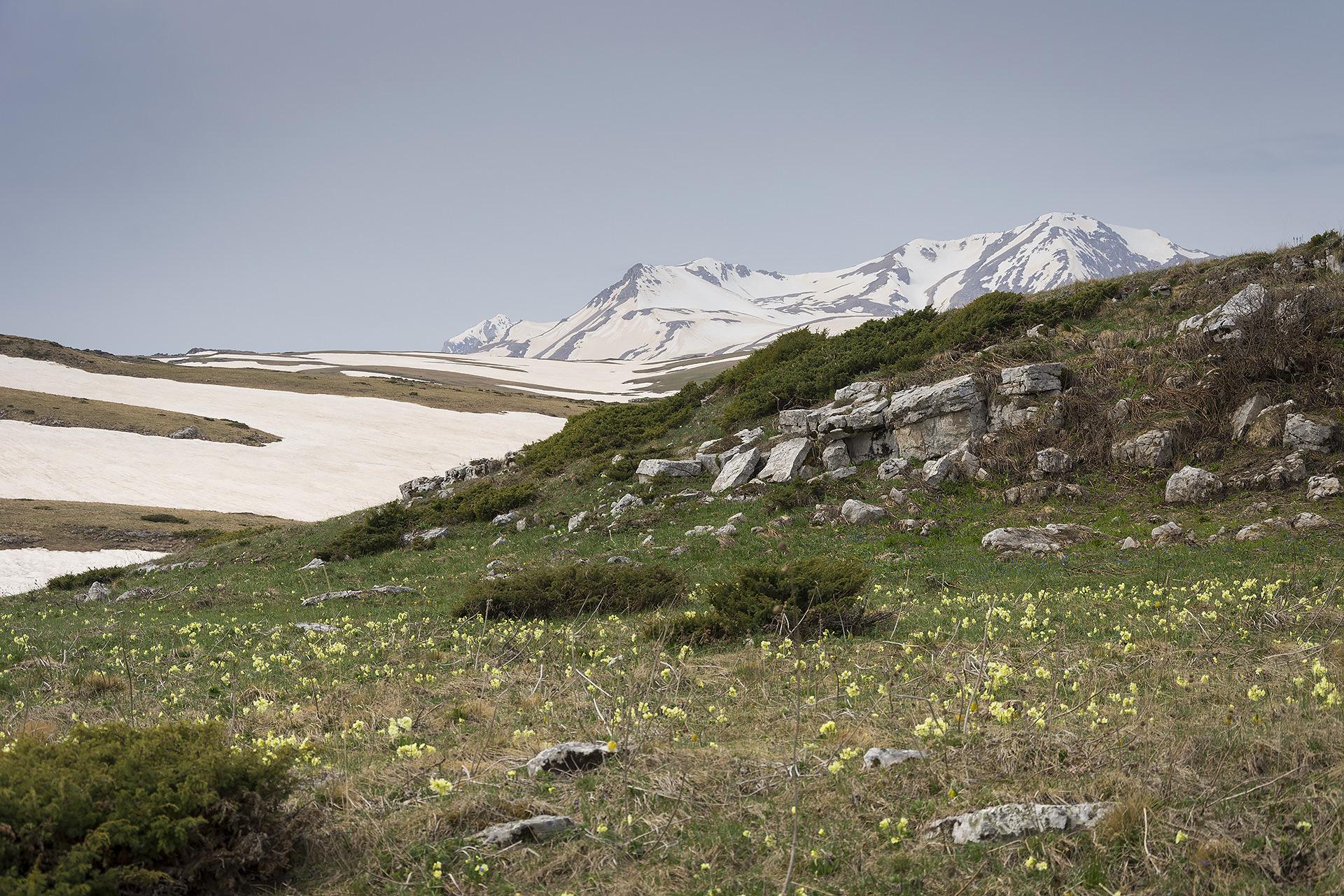 плато лагонаки в мае фото осуществлению цели мере