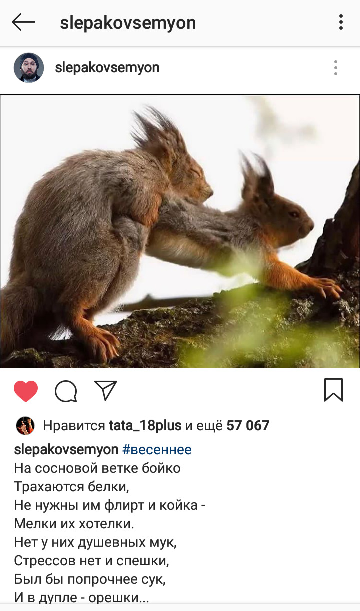 Анекдот Про Белочку