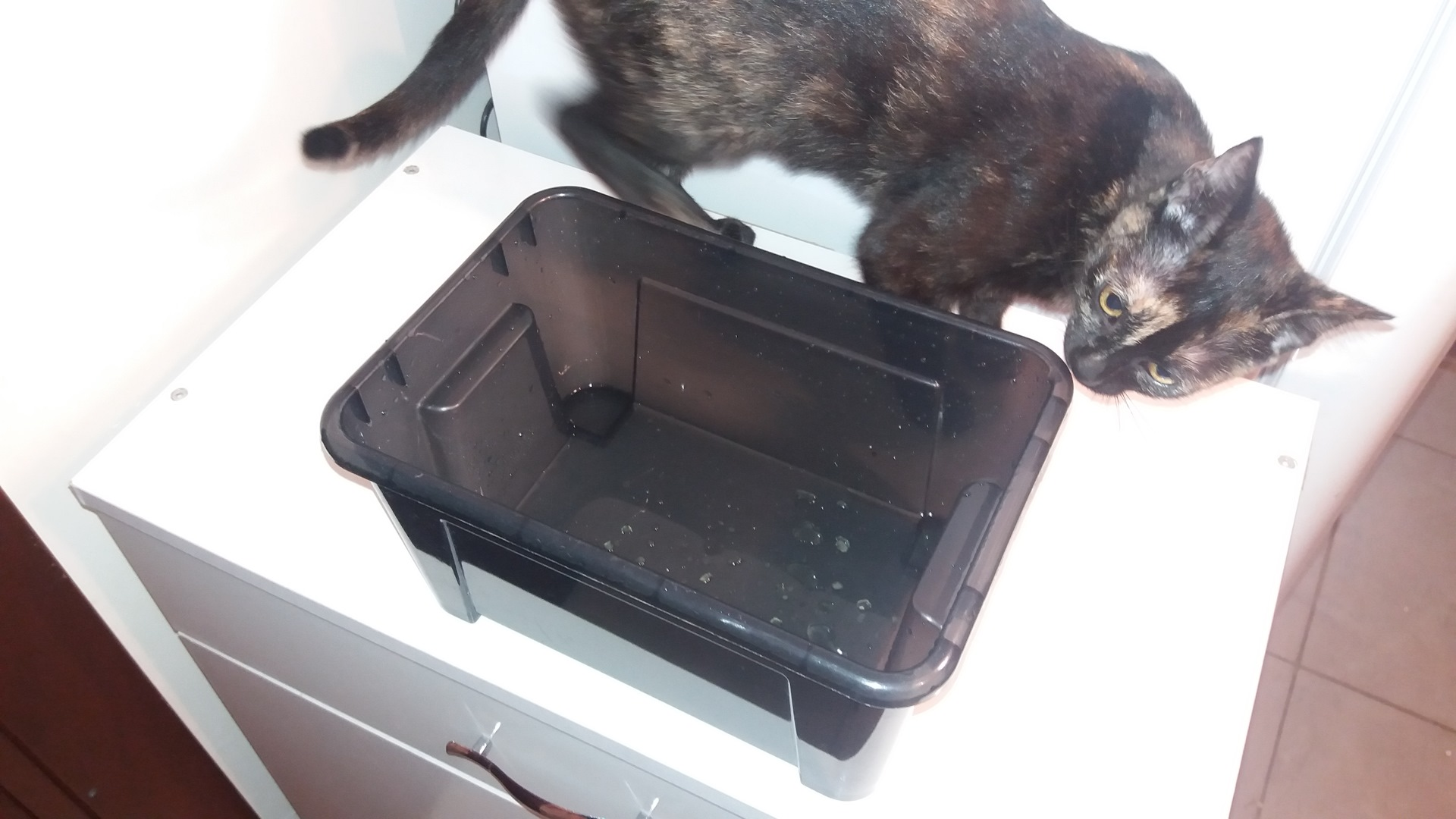 Автопоилка для кошки своими руками - Секрет Мастера 93