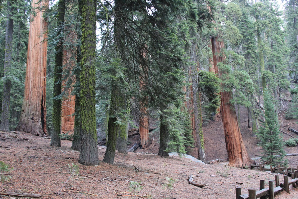 sequoia national park christian girl personals Hanford hot personals ads signup free and meet 1000s of local women and men in hanford, california looking to hookup on bookofmatchescom.
