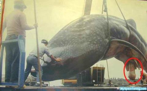 Половой член кита фото фото 404-421
