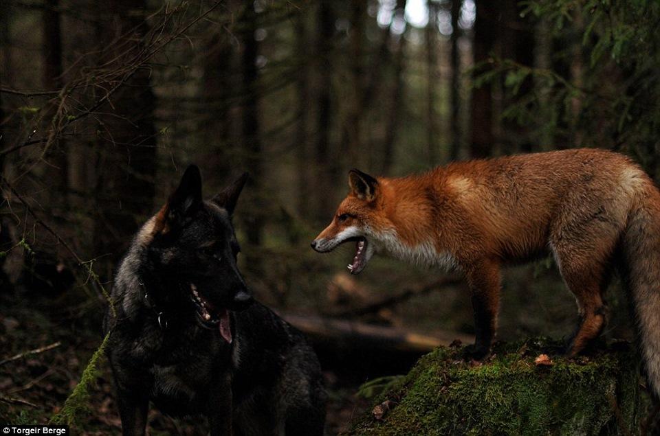 Волк целует зайца картинки