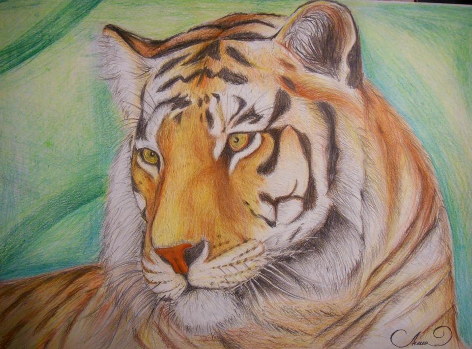 Тигр фото нарисованное карандашом
